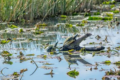 bprice reptiles-11