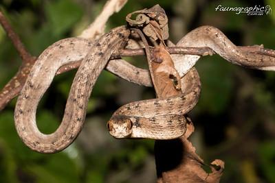 Slug Snake