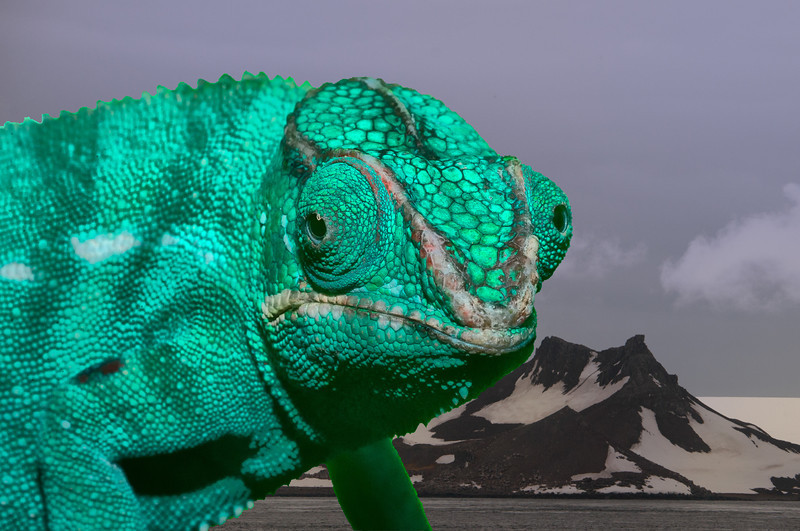 Composite of chameleon and Antarctica.