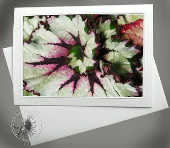 Rex Begonia FLW033