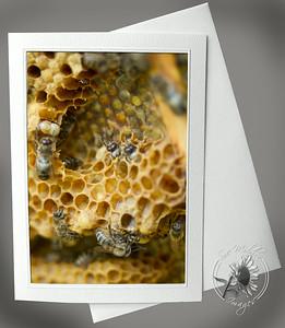 Honeycomb 2 ANI106