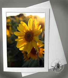 Sunlight Sunflower FLW035