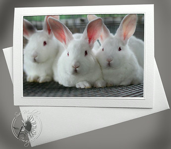 Bunnies ANI105