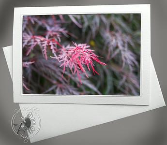 Red foliage FLW032