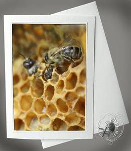 New Bees ANI113