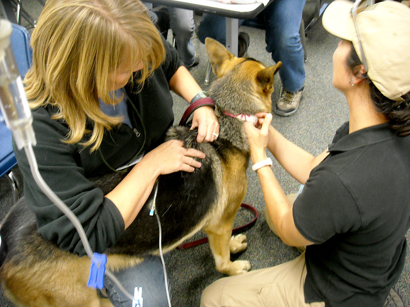 K-9 Dog first aid SAR City 2009