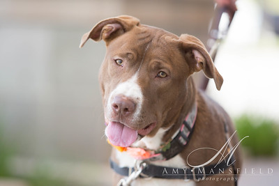 A1772813 COOKIE-4517
