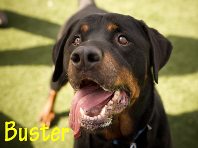 A1013194_Buster_0012