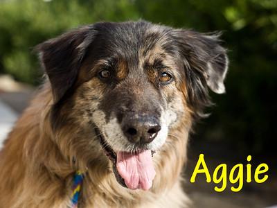 A0834791_AGGIE_003
