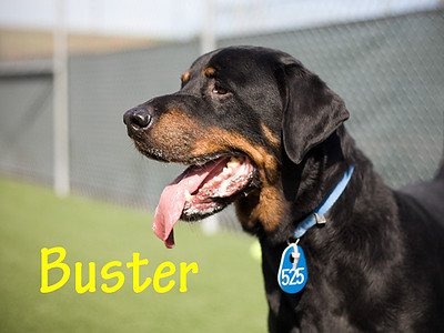 A1013194_Buster_0003