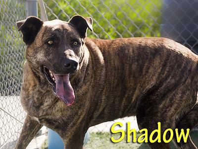 A1044358_Shadow_007