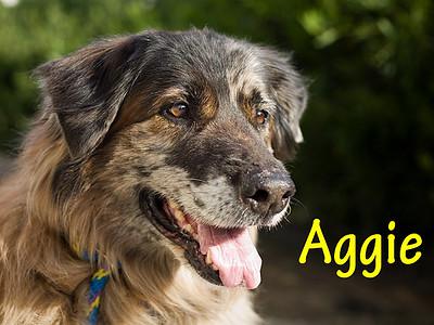 A0834791_AGGIE_002