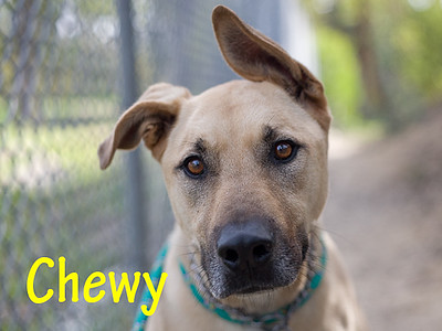 A1056721_Chewy_009