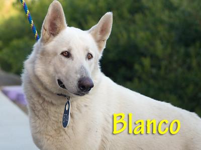 A1168377_Blanco003
