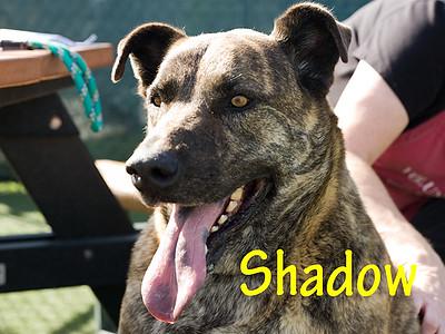 A1044358_Shadow_009