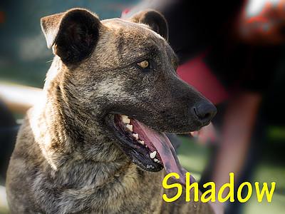 A1044358_Shadow_010