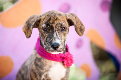 Puppy_Central_IMG_4042