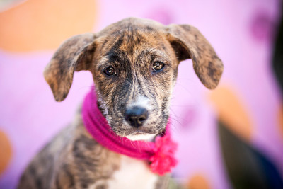 Puppy_Central_IMG_4048