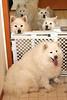 Rear: Oakley, Katie<br /> Behind gate: Nicky (foster), Tasha<br /> Front: Sierra