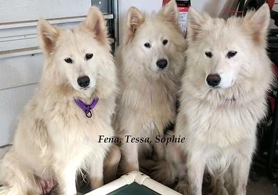 Sophie, Fena, and Tessa