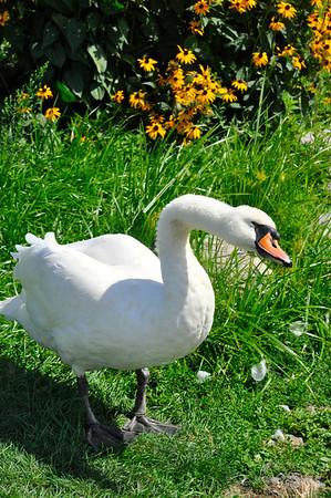West Place Animal Sanctuary Visit