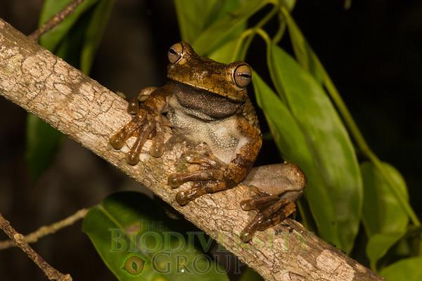 Biodiversity Group, _MG_8741