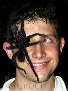 Mike Chiego with tarantula (Theraphosidae) - Lalo Loor, Stream - HMH