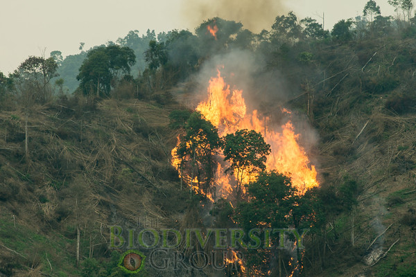 Why do we do what we do? Here is a forest being burned to plant a tree monoculture in Vietnam. Those tree stands are nearly devoid of reptile, bird, and mammal life. We want to show that the original forest has value left to itself.