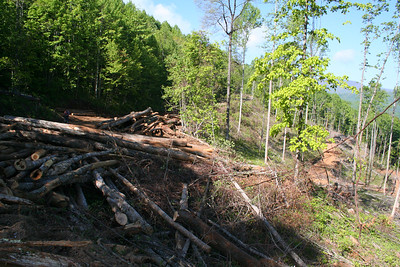 Trees ready for removal (You can see the the roads cut out of the mountain to access the trees in the background)