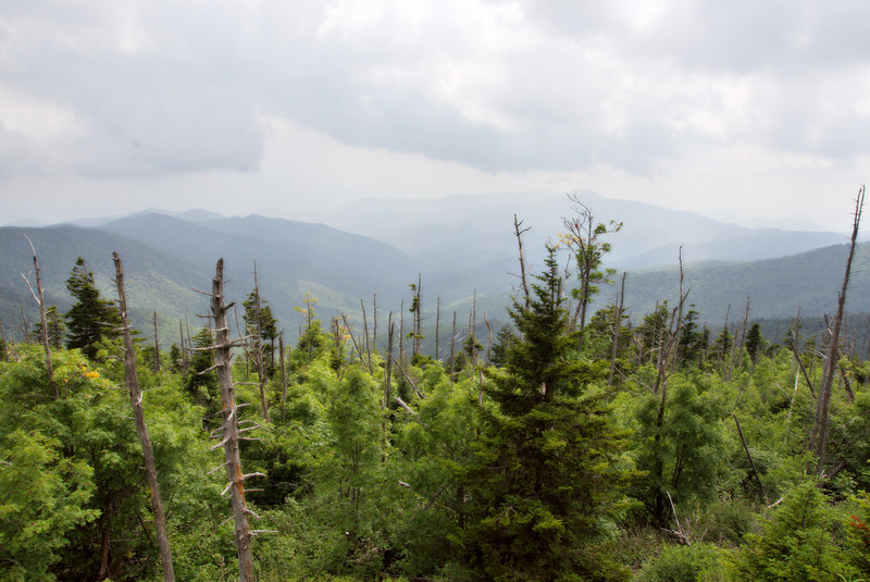While at the park, I took a drive / hike up to Clingman's Dome, the highest point in the Smokies.