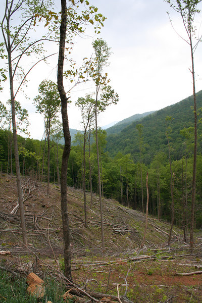9 m buffer retained along headwater stream; Macon Co, NC