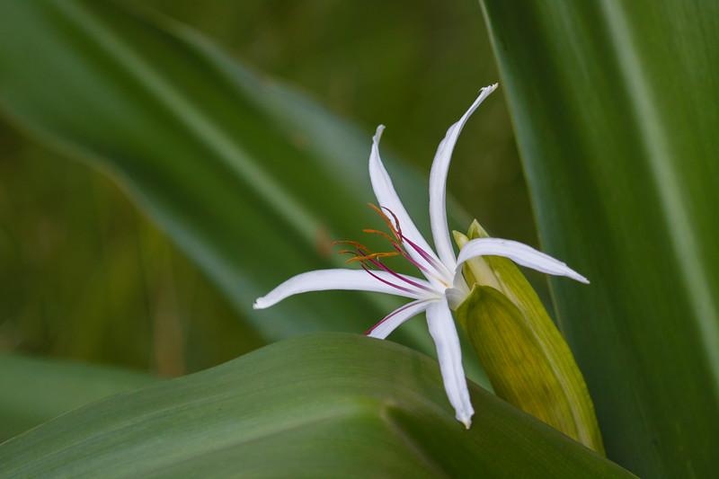 Palmetto flower