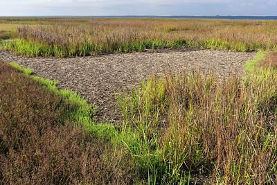 Sapelo Island January 2008