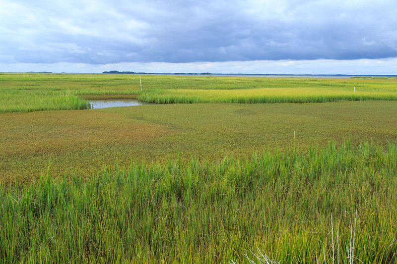 Saltmarsh Study Sites at Marsh Landing