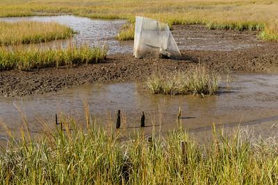 Invertebrate exclosures in the marsh