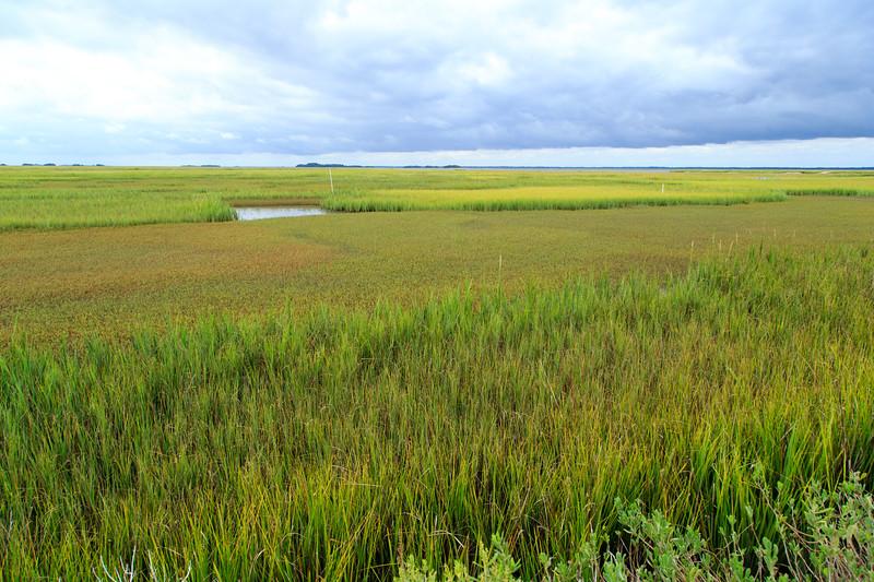 Saltmarsh Study Sites at Marsh Landing