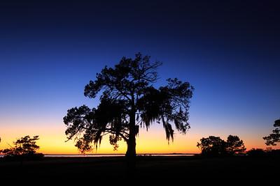 Live Oak Silhouette