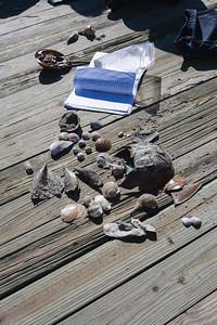 Shell identification