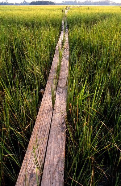 Odum-Teal Boardwalk