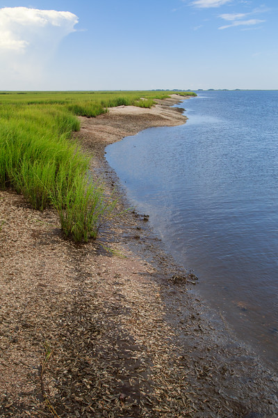 Scenic marsh border with oyster reef, Sapelo Island