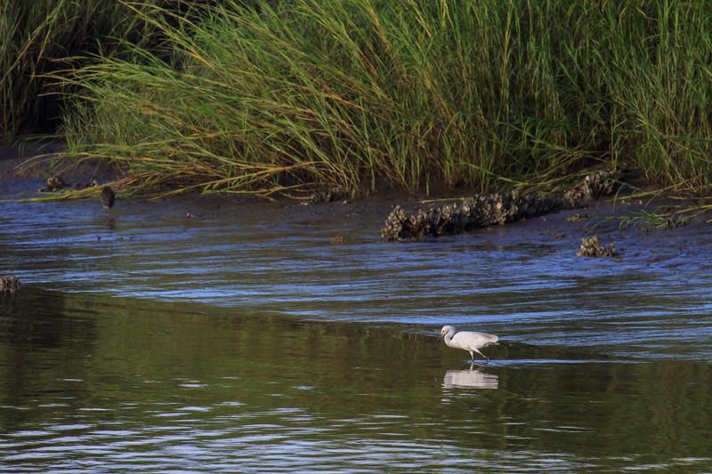 Egret on Sapelo Island