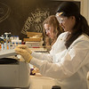 Michelle Waters a sophomore marine biology major in the OUR Explorer program and Senior chemistry major Cynthia McCord process samples of seawater testing for toxicity in a lab at the University of West Florida Monday February 22, 2016 in Pensacola, Florida. (Michael Spooneybarger/ CREO)