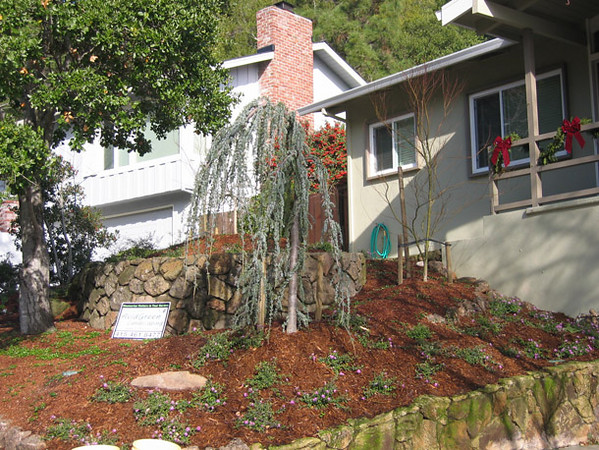 Mulch beautifies the garden, keeps down the weeds, retains soil moisture, softens soil-temperature swings,...