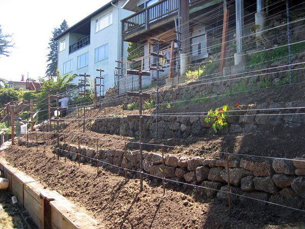 A backyard hillside is terraced with field stones, the soil is amended, and the grapevine trellis is installed with drip irrigation.