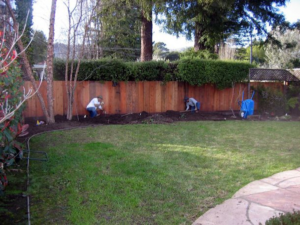 After a new fence is installed, the soil is richly amended and bermed.