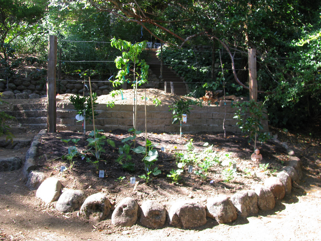 A new vegetable bed with drip irrigation and a new 'espalier' of fruit trees behind.