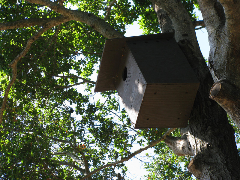 A barn owl box on the property for biological control of moles, voles, gophers, and rats.  It's recommended that neighbors in the greater neighborhood also install owl boxes since barn owls tend not to hunt close to their own home.  Other owls or animals might also make this their home.