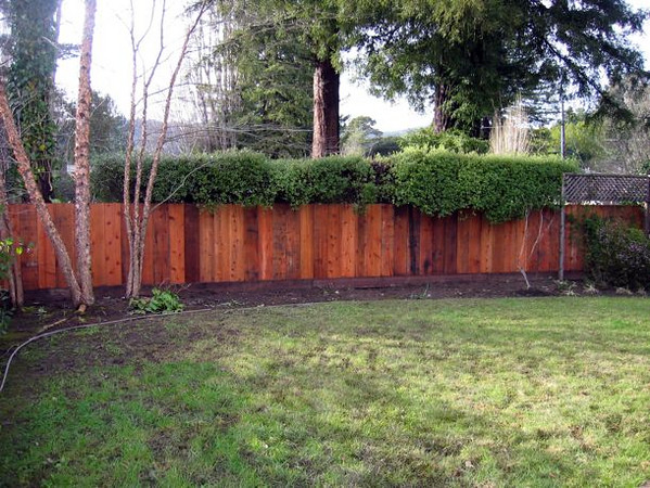 In with a new redwood fence on the property line.