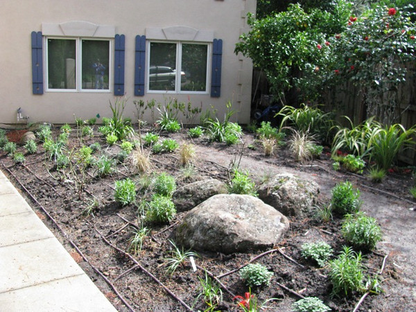 The soil is bermed up, the boulders are in as are the drip lines and new plants.