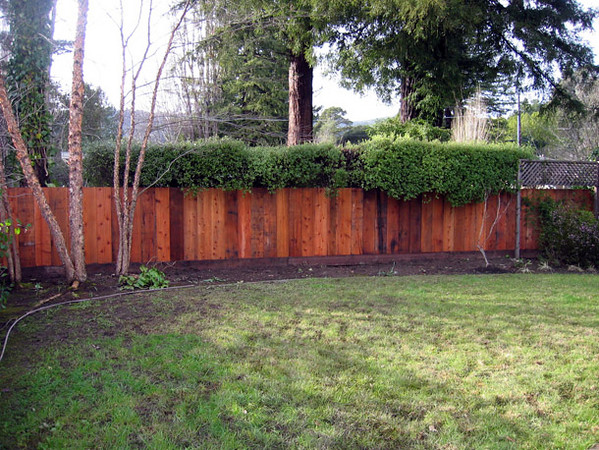 The new redwood fence is in.